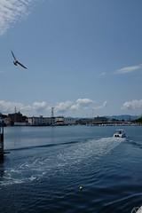 ... (dragonpeace) Tags: sea 海 かもめ ごめ gull boat