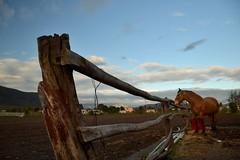 Líneas (facundolópez) Tags: lines líneas horse caballo clouds nubes campo countryside establo rancho stable farm