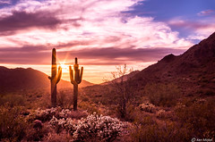 Sunset In The Desert (Ken Mickel) Tags: arizona buckeye buckhorncholla cacti cactus cholla clouds cloudy desert hdr landscape landscapedesert outdoors plants saguaro skylineregionalpark sunsets nature photography sunset