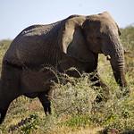 DSC07095 - NAMIBIA 2017 thumbnail