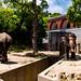 Rasukumaru and Sherry of Asian elephant : インドゾウのラスクマルとシェリー