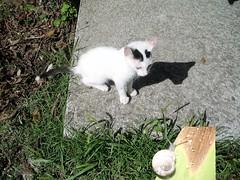 gattino curioso. (NICO fotografo per caso) Tags: gatto lumaca prato supershot abigfave