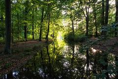 Spanderswoud - illuminated (PaulHoo) Tags: fujifilm x70 fuji nature landscape spanderswoud hilversum holland netherlands forest green reflection water woods tree nik 2017 sun light illuminated
