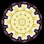 Yellow Petal Center with Some Purple Petal Edges thumbnail