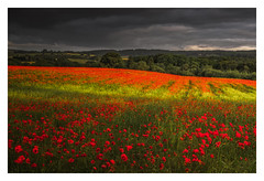 Field of Red (Vemsteroo) Tags: poppies poppy red field countryside summer storm sunrise cloudy light bright rural canon 7d mkii 35mm 14 art sigma worcestershire landscape nature beautiful outdoors colourful flowers wildflowers england uk