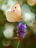 Butterfly and bokeh (@lbyper) Tags: nikkor105vr nikon nature nikkor105mmf28gvrmicro macro butterfly bokeh d3