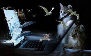 3D cat movie