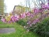 1282 (en-ri) Tags: fiorellini little flowers ramo sony sonysti foglie leaves