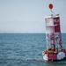 Seal Buoy