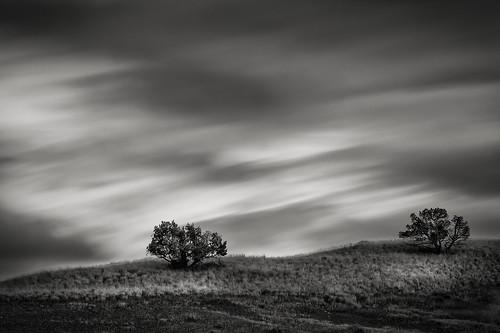 Two Shrubs (michellelynn) Tags: paintedhills oregon blackandwhite leelittlestopper clouds stormy