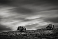 Two Shrubs (michellelynn) Tags: paintedhills oregon blackandwhite leelittlestopper clouds stormy
