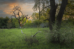 Memories of Spring Past (andrewpmorse) Tags: spring sunset trees clouds sky goldenhour guelph ontario canada dead old new fresh age canon 6d lee09ndgradhard 24105f4l landscape field forest