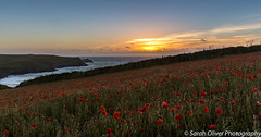 Poppy Field Sunset (SarahO44) Tags: 6d canon coast cornwall field joke kingdom national newquay ocean polly poppy sea sunset trust uk united porth west pentire wild flowers wildflowers