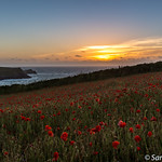 Poppy Field Sunset thumbnail