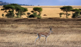 The Beauty Of The Tanzanian Wilderness