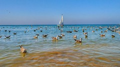 El velero (horizonteazul) Tags: gaviota verano summer sea islantilla huelva españa spain andalucía velero