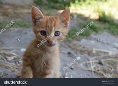 Cute little kitten (Aneliya Ganeva) Tags: cat animal nature cute kitten baby babycat sweet pet homeless adopt beautiful eyes