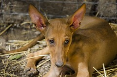 (Mihai Csipak) Tags: cachorro perro dog