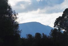 Mount Kembla (Kaptain Kobold) Tags: kaptainkobold mount kembla nsw australia wollongong landscape scenery trees escarpment illawarra