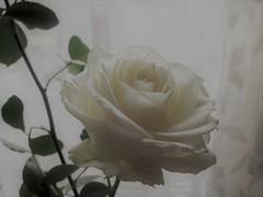 Ringraziando..la vita ! (onDa8) Tags: vita amicizia amore forza pensiero grazie ricordo abbracci vicinanza affetto cura attenzioni condivisione incontri