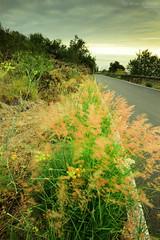 Road to Rojas (gjaviergutierrezb) Tags: plants red pink canaryislands islascanarias green longexposure