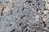 Potter Wasp (S_Crews) Tags: calfornia sanbernardinocounty rodmanmountains bureauoflandmanagement publiclands desert mojavedesert arthropod insect hymenoptera bee wasp potterwasp vespidae eumeninae