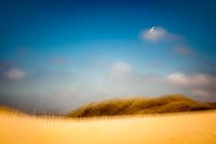 Ruhe II (Ans van de Sluis) Tags: ansvandesluis art birds dunes fineart june landscape nature sand sanddunes sea seagull sunset surreal blur