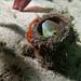 Peek a boo - Petroscirtes lupus blenny #marineexplorer