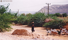 199909 Yemen Hadramaut (51) (Nikobo3) Tags: asia orientemedio arábiga arabia penínsulaarábiga yemen hadramaut tarim desierto desiertoramlatassabatayn paisajes arquitectura architecture culturas travel viajes nikon nikonf70 f70 sigma70300456 fujicolorsuperia100iso película nikobo joségarcíacobo flickrtravelaward ngc