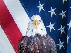 Independence Day 2017 (Wes Iversen) Tags: 4thofjuly htt independenceday michigan nikkor18300mm texturaltuesday composites digitalart eagles flags texture holidays