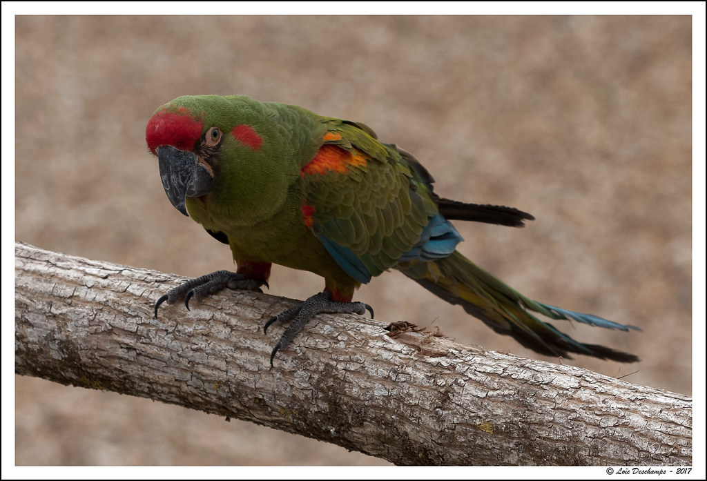 The world 39 s best photos of beauval and oiseau flickr for Oiseau france