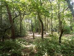 taylor's wood (Steve Nulty) Tags: bidstonhill bidstonlighthouse bidstonvillage bidstonwindmill bidstonobservatory