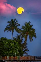 Pompano Beach Full Moon Rise at the Hillsboro Inlet (Captain Kimo) Tags: captainkimo coconuttree easyhdr florida fullmoon hdrphotography hillsborolighthouse pompanobeach moonrise