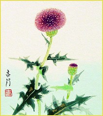 Thistle (Japanese Flower and Bird Art) Tags: flower thistle cirsium asteraceae kichiyuki sato nihonga shikishi japan japanese art readercollection