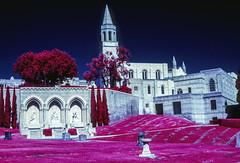Cemetery (Blurmageddon) Tags: mediumformat film analogphotography colorinfrared infrared kodak eir aerochrome epsonv700 orangefilter circularpolarizer cpl bronicaetrsi aristae6 selfdeveloped