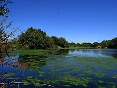 Paz e paisagem. Nada mais necessito. (Ⱥndreia) Tags: sonydschx200v portugal póvoadevarzim parquedacidade citypark 2017 natureza nature água water