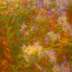 G47A1150-Edit-Edit-Edit.jpg (kevinliang8) Tags: centralparknyc digitalpaintings flower