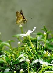 Landing (tanreineer) Tags: wild beauty colot insects macro closeup small nature wings antenna plants leaves flower landed butterfly nikonp900