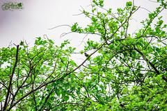 green (akashunnikrishnan) Tags: birds green nature love sky photography shades india wildlife canon art trees