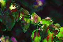 Traslúcidos (seguicollar) Tags: imagencreativa photomanipulación art arte artecreativo artedigital virginiaseguí plantas árbol rama verde green trasluz traslúcido desdeabajo