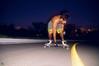 DSC_7500.jpg (danpradophoto) Tags: boardsport esporte freebord