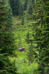 DSCF2002 (LEo Spizzirri) Tags: alpine cascade cascademountains cascades forest heather highway hike lake loop mountain northwest pacific pnw seattle washington