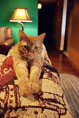(K. Sawyer Photography) Tags: cat animal feline blanket home house rug lamp tabby