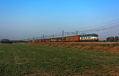 FS E655 529 (maurizio messa) Tags: e655 caimano cargo pavese nikond7100 lombardia mau bahn ferrovia freighttrain fret guterzuge treni trains railway railroad