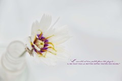 Semana 28 - fragile (+ Groupe DOUCEUR + ABCédaire) Tags: fragile stilllife makemesmile minimaliste macrounlimited macro flickr flickrelitegroup flickrelite fleur flowers nikon nikoneurope naturebynikon nikonpassion nature blanc highkey
