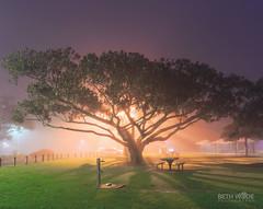 On a Foggy Night (Beth Wode Photography) Tags: fog weatherevent wellingtonpoint redlands nightscape tree moretonbayfigtree picnicground lightrays beth wode bethwode