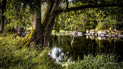 _61A4216.jpg (fotolasse) Tags: stenfors natur nature sweden sverige småland kronoberg å vatten water river bäck sten grönt green canon hdr 16x9 tingsryd