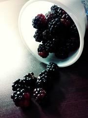 Blackberries (ranaghana2) Tags: blackberries blackberry fruit freshfruit sustainable organic organicfood medford oregon food nature
