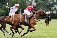 © 2017-Photographs by Robert Piper- All Rights Reserved 1988 _ (Ham Polo Club) Tags: finalsummertournamentrosieadamsbowl hampoloclub jacaranda jetset 2017the london polo club tw107ah england gbr