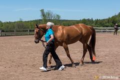 JBC_8572.jpg (Jim Babbage) Tags: krahc annualshow appaloosa horses bethany